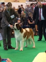lilly-crufts-1