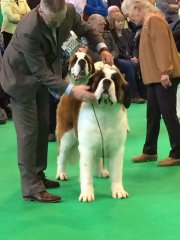lilly-crufts-2